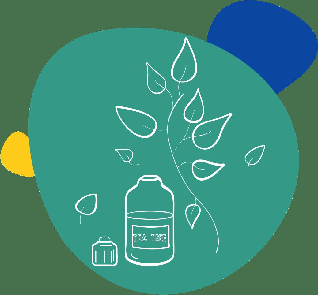 Dessin d'huile essentielle et d'une branche de tea tree